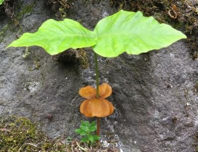 奥日光の植物