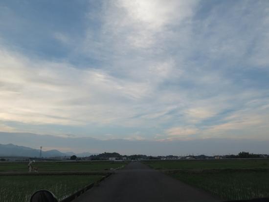 神奈川 田んぼ