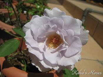 s-IMG_1592k1.jpg