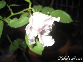 s-IMG_1774k1.jpg