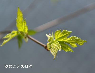 DSC_0169-k.jpg