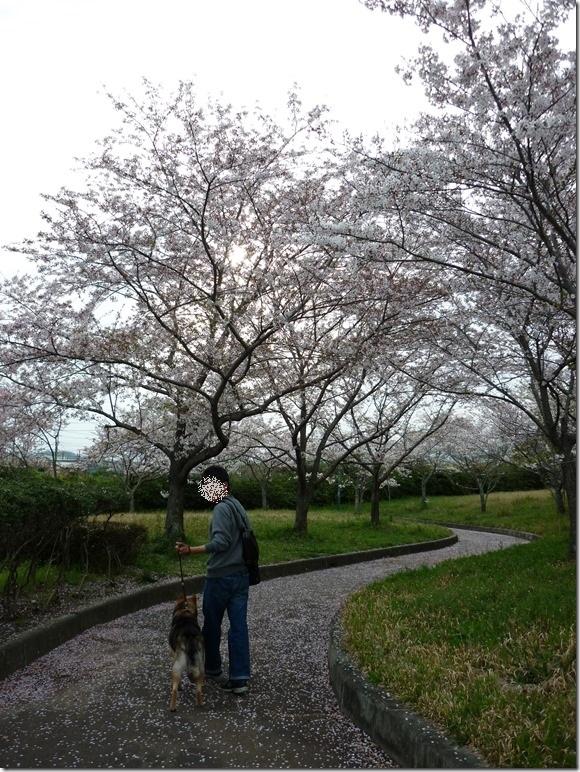201604お花見散歩-01