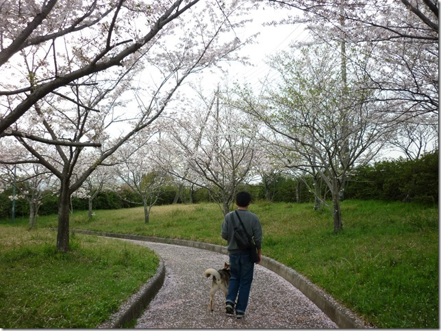 201604お花見散歩-06