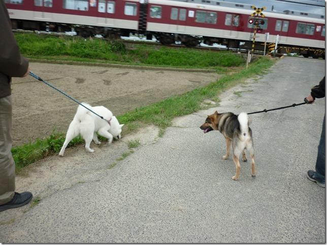 201605GW電車散歩-12