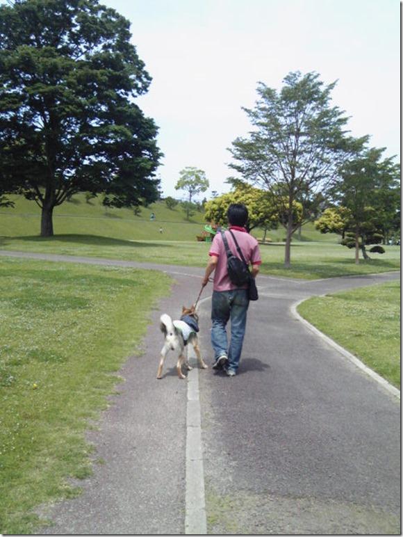 201605公園散歩と田丸城址散策-03