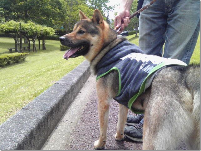 201605公園散歩と田丸城址散策-06