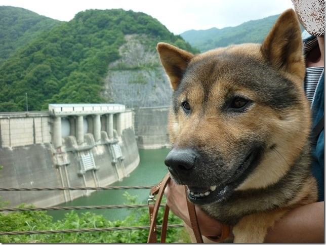 201606-13真名川ダム-32