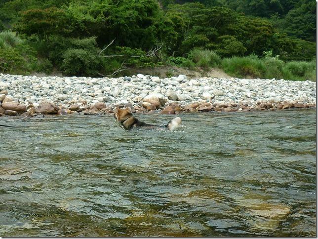 201607川遊び04