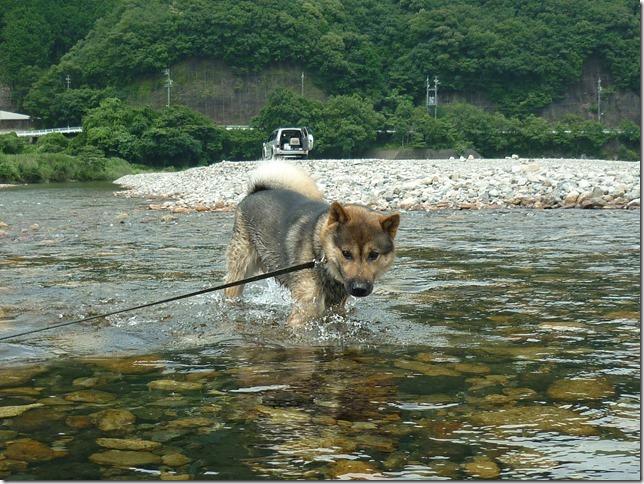 201607川遊び11
