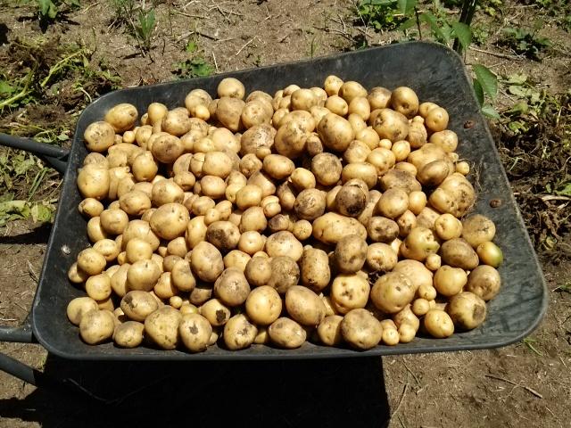 収穫量0716