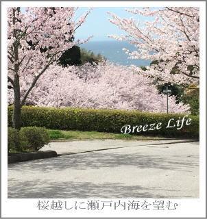 sakurazaka3.jpg