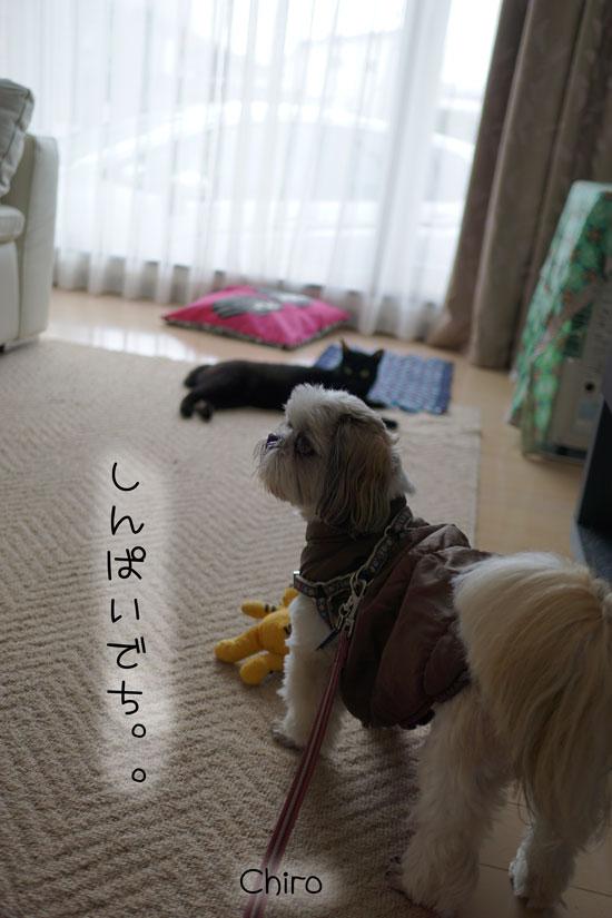 03-30_7457.jpg