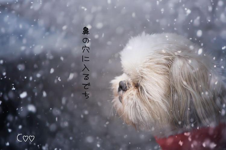 NAT58_yukimau20140616.jpg