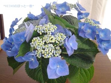 義父の紫陽花