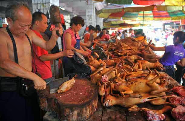 Yulin dog meat 4