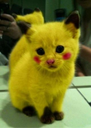 ポケモン猫