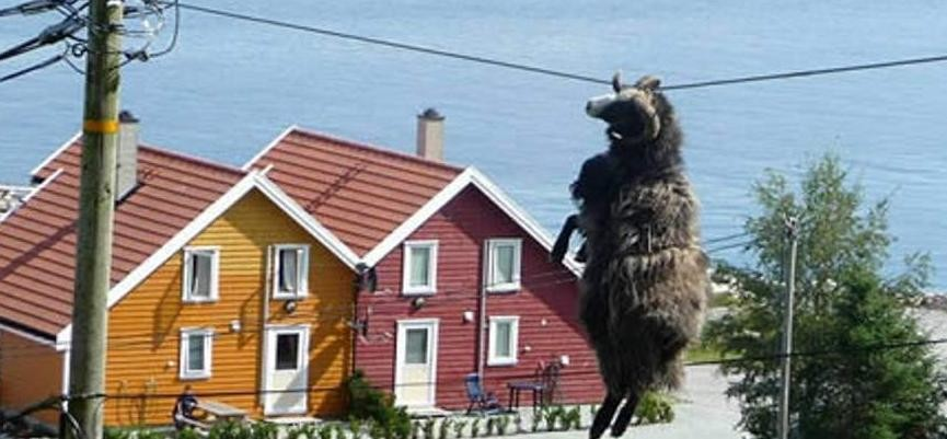 animals-getting-stuck-sheep.jpeg