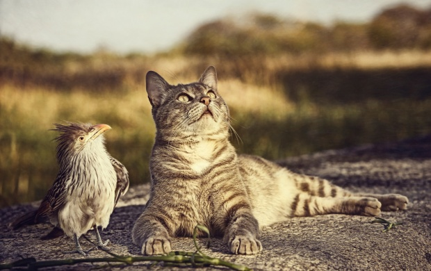 cat_bird_curiosity-t3.jpg
