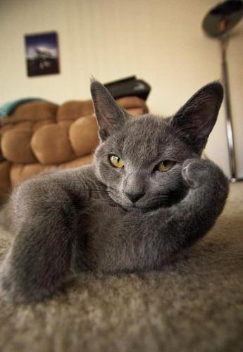 pro_posing_cats03.jpg