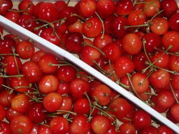 cherry1l.jpg