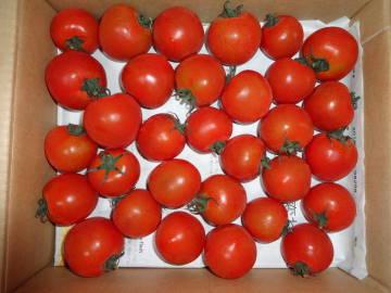 tomato2l.jpg