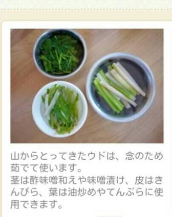 ウド料理1