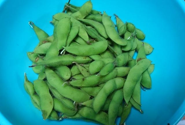 有機枝豆1