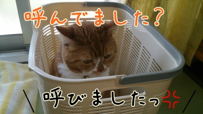 DSC_0389-01.jpg