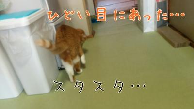 IMG_20160719_092713-01.jpg