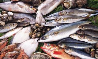 新鮮魚介類画像