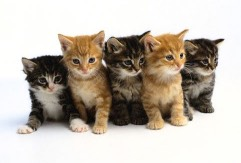Free-Cat_Fotor.jpg