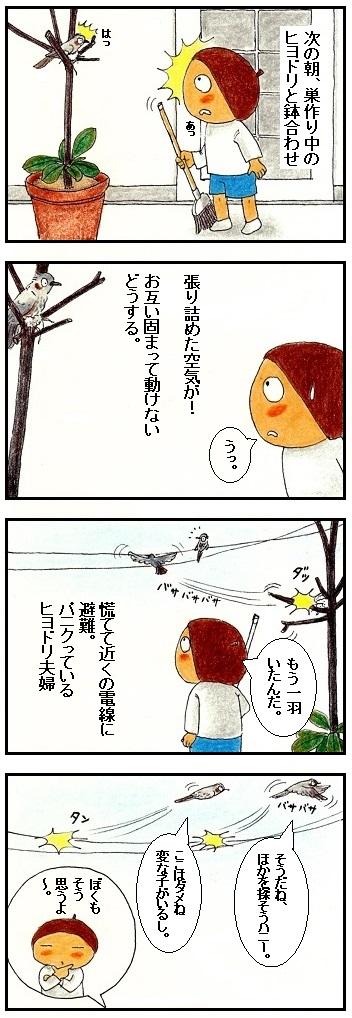 ヒヨドリの巣作り②