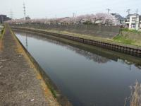 川べり20160410