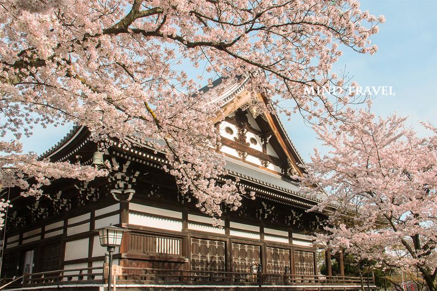 妙顕寺 桜2