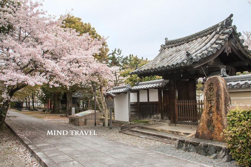 安楽寿院 書院・庫裏 桜