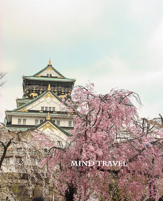 大阪城 しだれ桜