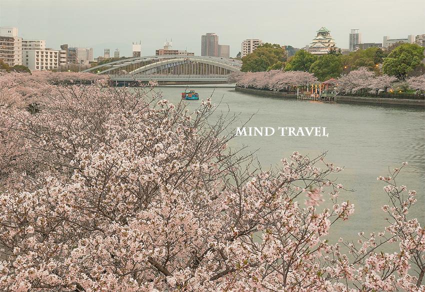大阪城 大川より 桜