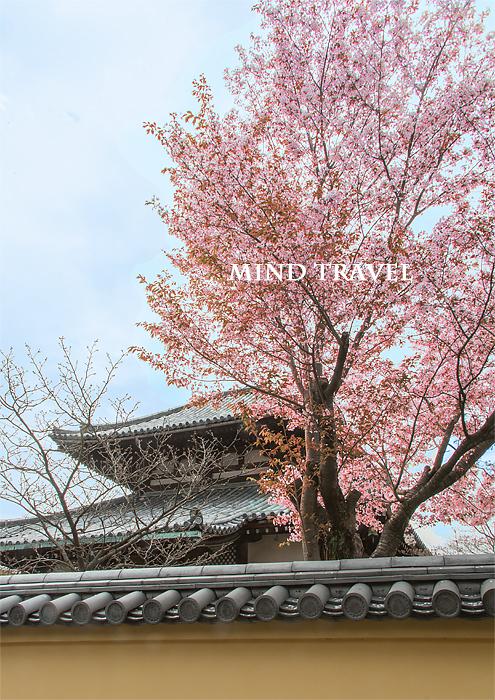 福智院 桜