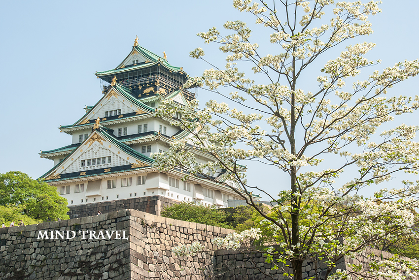 大阪城 花水木 白