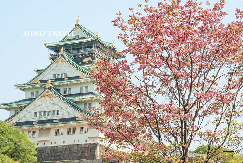 大阪城 花水木 赤
