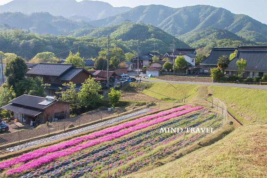 長尾の芝桜 民家2