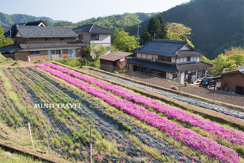 長尾の芝桜 民家