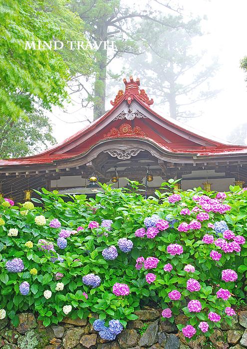 勝尾寺 紫陽花 三宝荒神社
