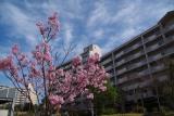 神戸市営名谷駅東住宅 早咲きの一本