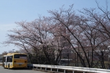 名谷駅前バスターミナルに咲く