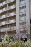 神戸市営名谷駅東住宅 ユキヤナギに映える