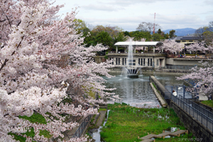 南禅寺と周辺の桜景色