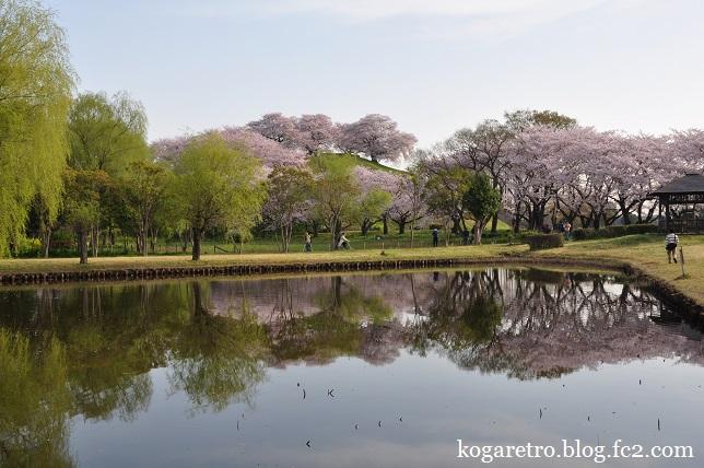 2016さきたま古墳の桜