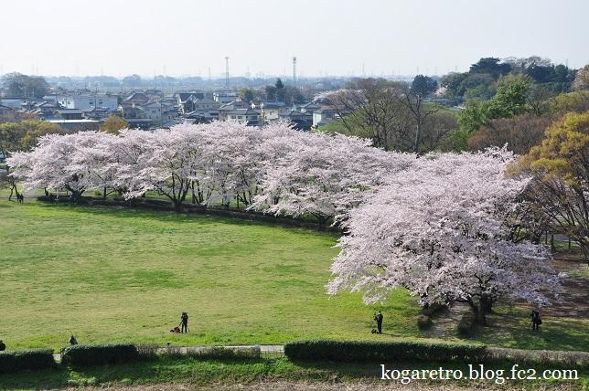 2016さきたま古墳の桜6