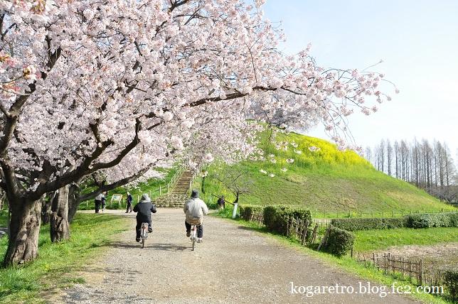 2016さきたま古墳の桜8